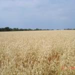 Skønne marker (3)